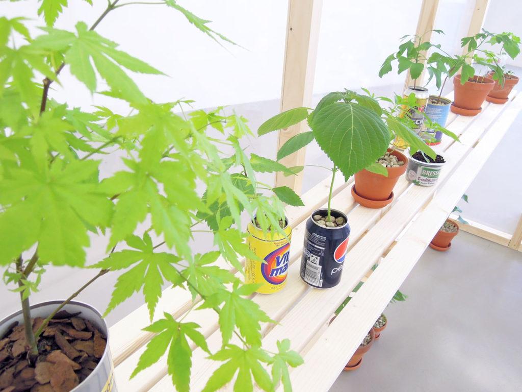 """Close up image of """"Greenhouse"""" 1 by Nana Hirose & Kazuma Nagatani."""