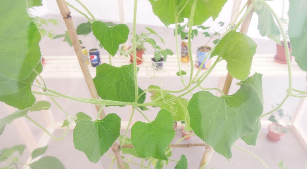 """Image of """"Greenhouse"""" by Nana Hirose & Kazuma Nagatani."""